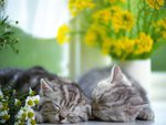 Sleeping among flowers