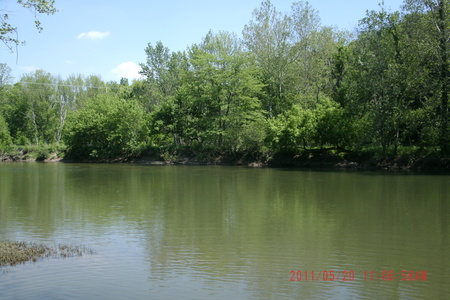 River - forest, blue skies, water, creek