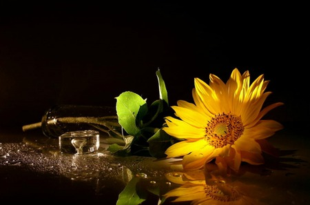 Solitary Sunshine - flower, table, still life, sunflower