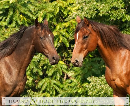 2 Horses - arabian horses, ponies, foal, black horses, baby horses, horses, stallion, brown horses, filly, i luv horses, horse photography, mare, animals