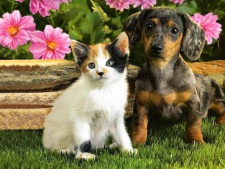 So Cute Together :D - best friends, puppies, flower, kittens, cats, baby animals, animals, dogs