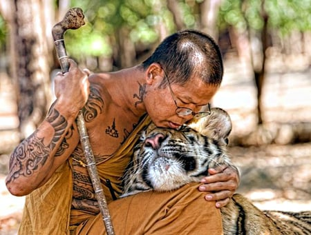 Harmony - staff, blessing, buddhist, glasses, tiger, thailand, spiritual, gentle, love, fur, harmony, photograph, rest, stripes, tiger temple, respect, contentment, compassion, cuddle, peace, temple tattoos, trees, gentleness, monk, whiskers, peaceful, bonding, bangkok