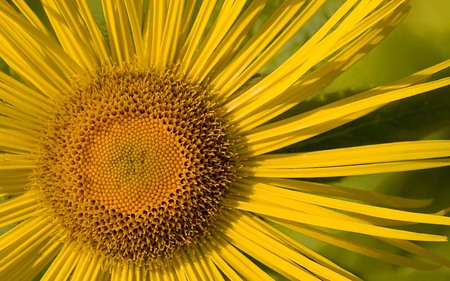 Sunflower - view, garden, beauty, yellow, sun, beautiful, nature, flower