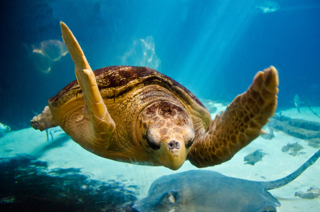 Sea Turtle - ocean, aquatic, water, sea turtle, turtle