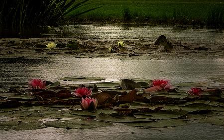 Lotus flower flowers nature background wallpapers on desktop lotus flower flowers lotus beautiful river mightylinksfo
