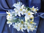 White lilies in a blue background
