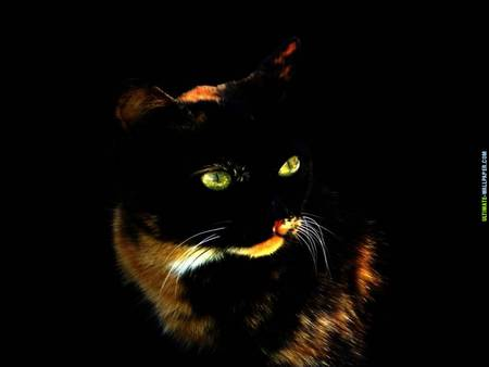 Neon Eye Cat Cats Animals Background Wallpapers On Desktop Nexus