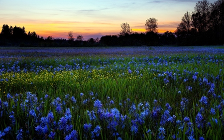 Field Of Flowers - colorful, peaceful, yellow flowers, meadow, floral, sunrise, flowers, sky, wildflowers, clouds, field of flowers, grass, fields, tree, blue flowers, landscape, sunset, blue, colors, splendor, lavender, nice, trees, nature, yellow, beauty, beautiful, lovely, valley, spring, field, pretty, green, dew, morning, view