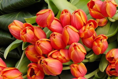 Tulip arrangement - flowers, orange, tulips, spring, nice