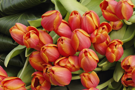 Tulip arrangement - orange, tulips, flowers, spring, nice