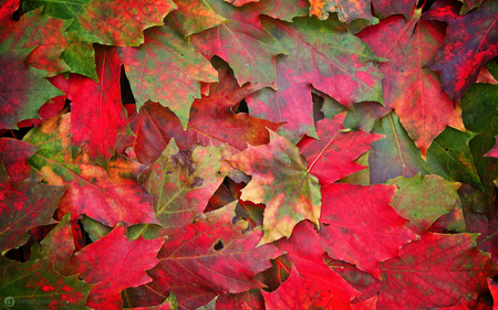 remember autumn - beauty, fall, photography, leaves, red, nature, autumn