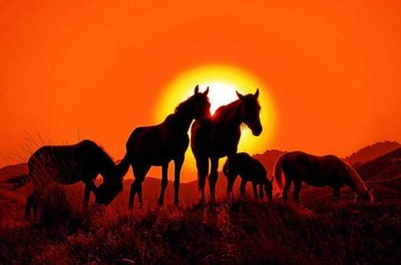 BEAUTIFUL HORSES  IN SUNSET - sillhuette, orange, shadow, nature, sunset, horse, horses, animal