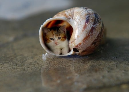 ...my new home - lovely, snail shell, funny, cat, kitten