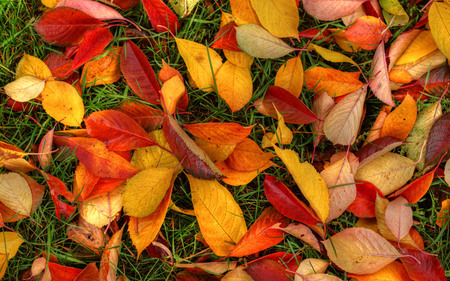 autumn floor - beauty, yellow, fall, colorful, autumn, orange, pretty, colors, photography, leaves, green, red, nature