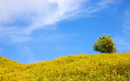 Solitary - flowers, hills, fields, skies, blue, tree, rolling, nature, lone, beautiful, clouds, rural, calm