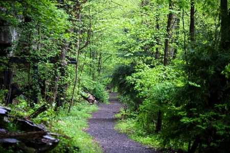 Spring Hiking Trail Forests Nature Background Wallpapers On Desktop Nexus Image 694975