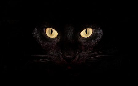 black cat - kitty, superstition, cat, halloween, scary, dark, eyes, bright, yellow, animal, feline, pretty, black, closeup