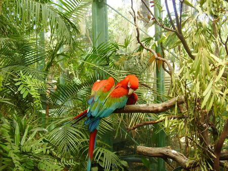 Macaws - birds, trees, macaws, animal