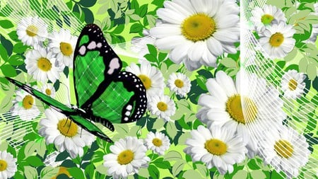 Chamomile and Butterfly - spring, floral, butterfly, green, summer, chamomile, blossoms, blooms, white