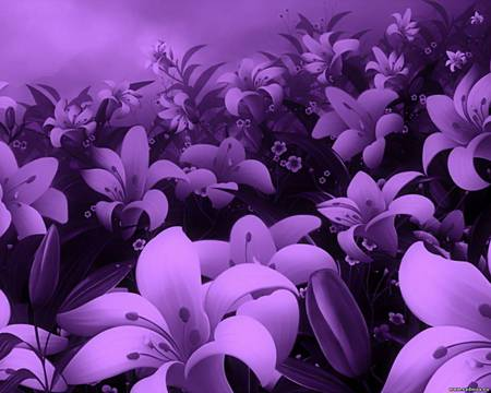 Purple flower field flowers nature background wallpapers on purple flower field pretty purple flower nature petal mightylinksfo