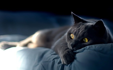 turn this scary movie off! - funny, humor, black, animal, scary, kitty, cat