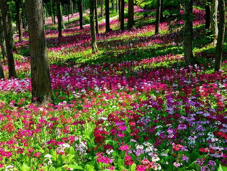 Flower Carpet Flowers Amp Nature Background Wallpapers On