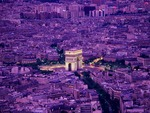 Triomphe in Lilac