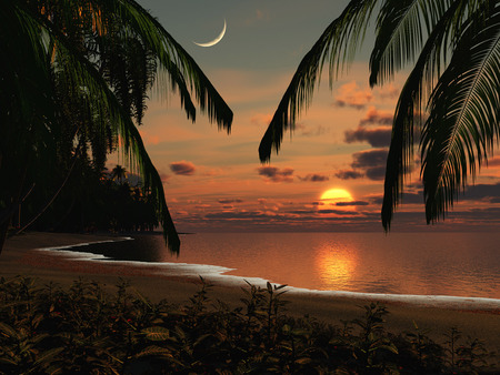 beach - sunset, ocean, sky, night, palms, beach