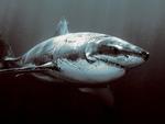 shark terror of the ocean