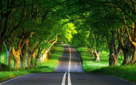 nice day for a ride - beauty, open, photography, trees, summer, road, nature