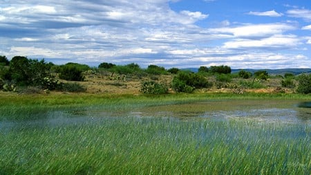The Marsh - grass, wetland, spring, trees, sky, clouds, brush, ecology, summer, marsh