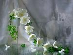 White fragrance