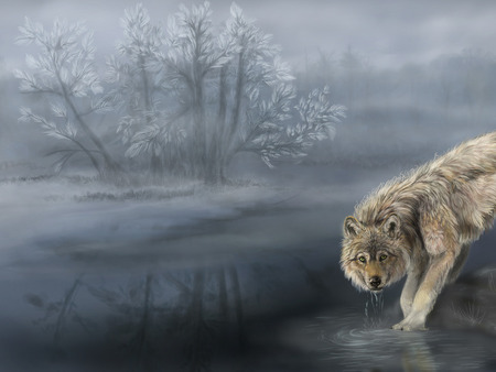 Wolf in mist - animal, river, wolf, tree, mist, sweet