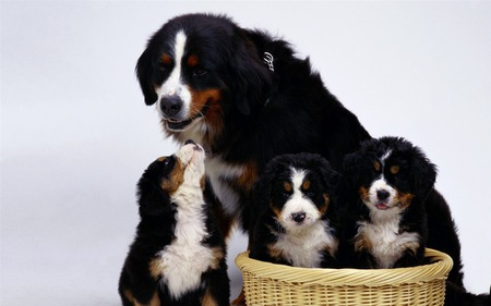 Mom and us, her sons - family, basket, love, mom, puppy, dog