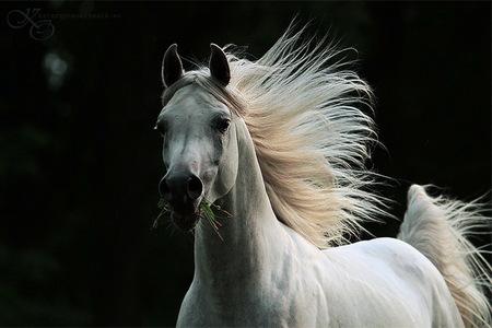 Freedom stallion - Horses & Animals Background Wallpapers ...  Freedom stallio...