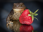 A strawberry for a kiss