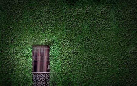hidden doorway - door, beauty, photography, leaves, ivy, green, abstract, doorway