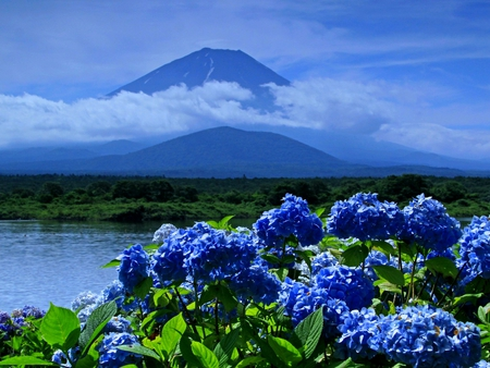 BLUE BEAUTY - blossoms, mountain, spring, lake