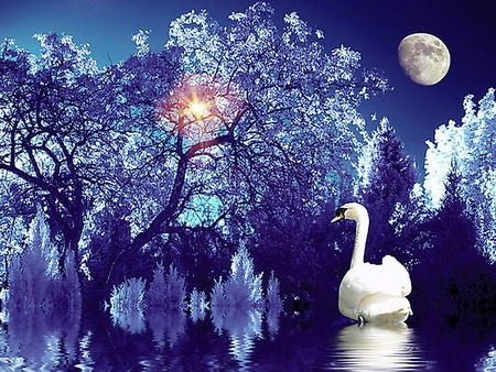 Ice blue - reflection, swan, blue, moon, water, trees, sun