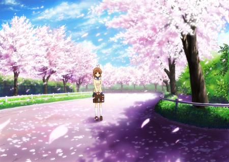 Sakura Tree Path Other Anime Background Wallpapers On Desktop Nexus Image 704753