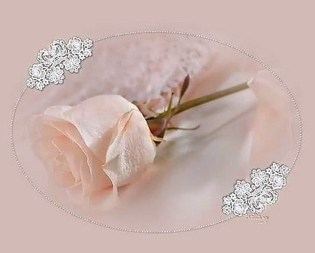 A rose for Milly - rose, lace, single, pink, stem