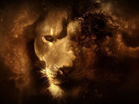 Lion Portrait 3d And Cg Abstract Background Wallpapers On