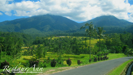 jatiluwih-bali-indonesian - forest, trees, sky, clouds, bali, mountain, green, nature, road