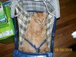 Baby cat in the stroller