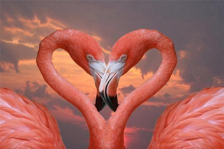 Love Birds Birds Animals Background Wallpapers On Desktop Nexus Image 709519