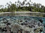 Coral-Reef-Solomon-Islands