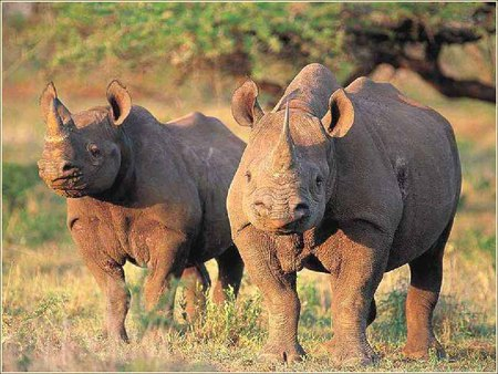 Rhino's - rhino, big, great planes, pointy nose