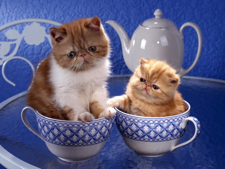 Kittens in cups - Cats & Animals Background Wallpapers on Desktop ...