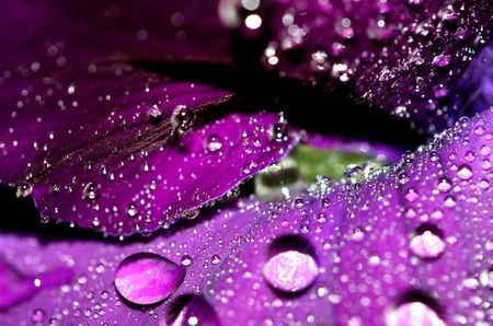 Water Drops - rain, water, drops, flowers, purple, nature, flower