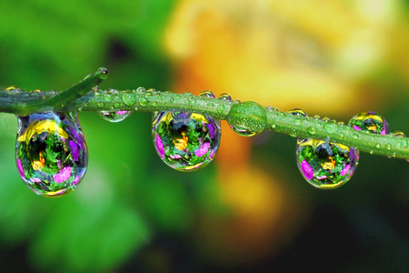 Colorful Waterdrops - flowers, brunch, drops, water, nature, rain, flower